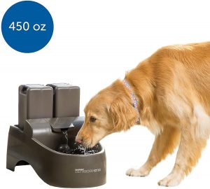 doggy water fountain